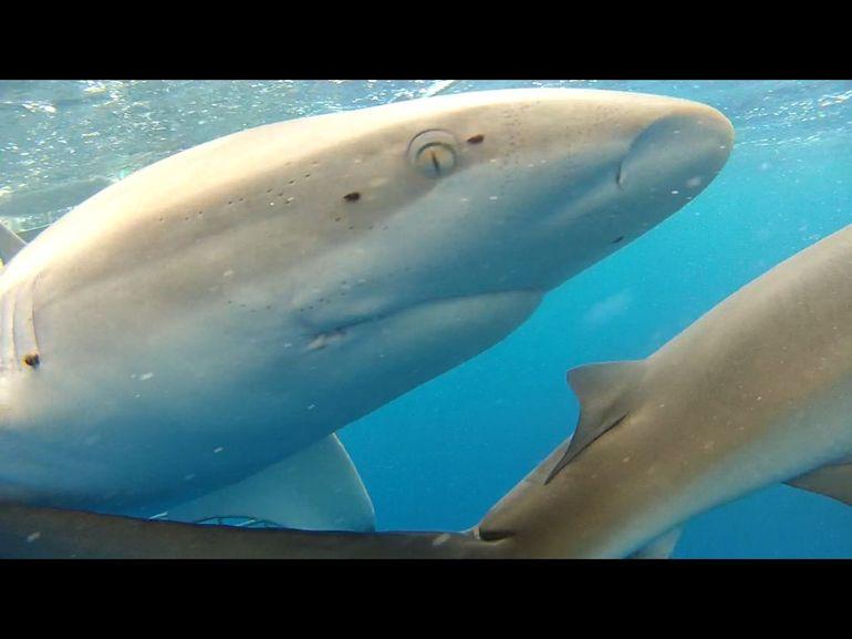 requins-photos-prises-souvenirs