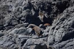 Seals on rocks , Rene v - February 2017