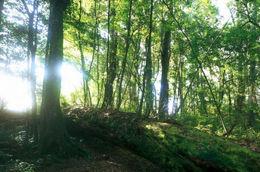 Walking along the trails in Alishan - July 2012
