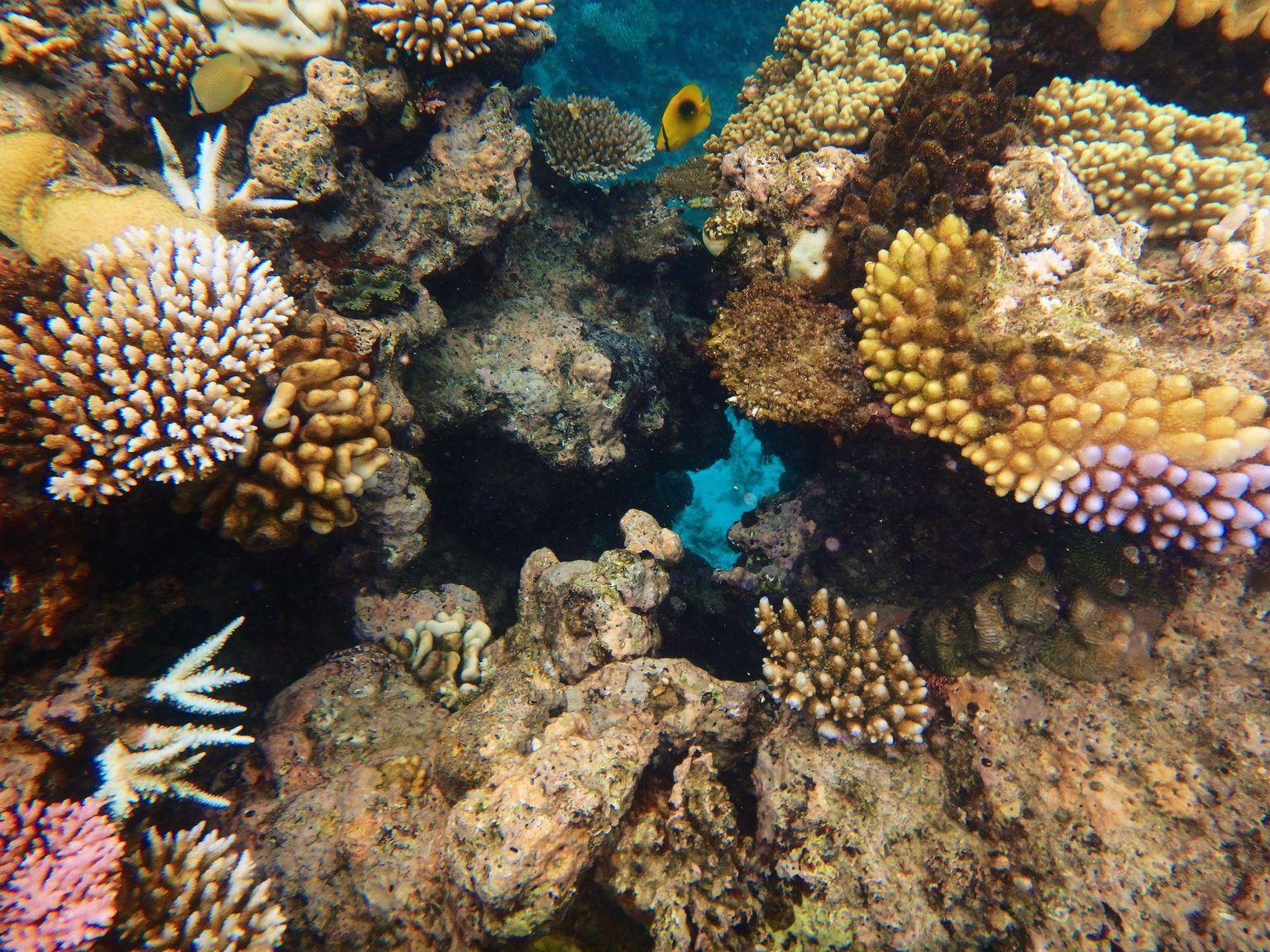Erlebe  das Great Barrier Reef mit einem Zwischenstopp in Singapur und Hongkong