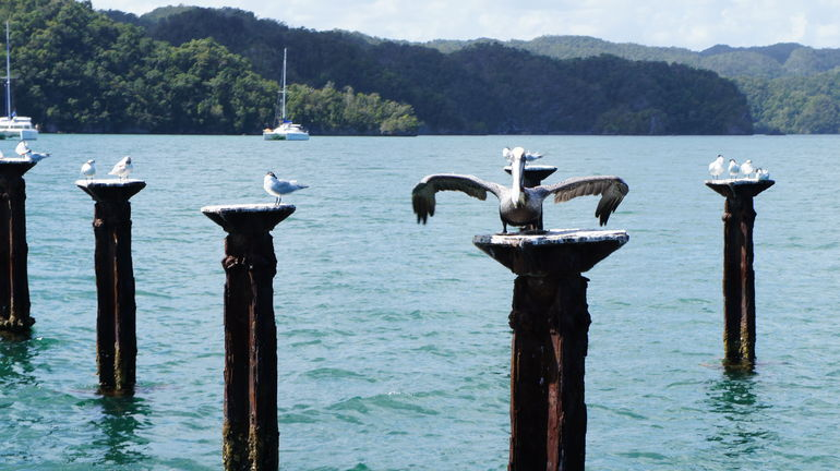 Birds on old pier pilings - Punta Cana