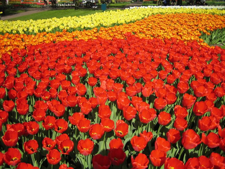 Keukenhof Gardens, Netherlands - Amsterdam
