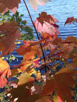 Leaves by lake , junkmgpf - October 2014