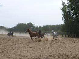 rounding up horses , jed25 - September 2016