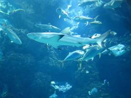 Shark Tank in the Oceanographic Museum, Monaco , Nancy B - October 2014