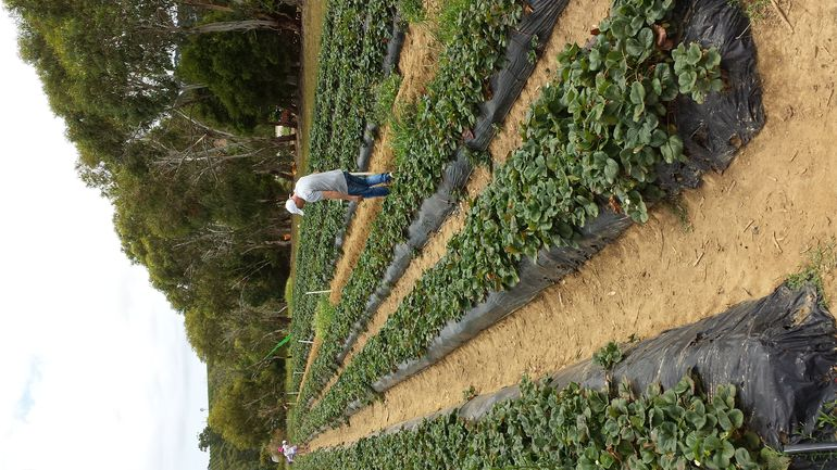 Mornington Peninsula including Strawberry Farm Day Tour from Melbourne photo 8