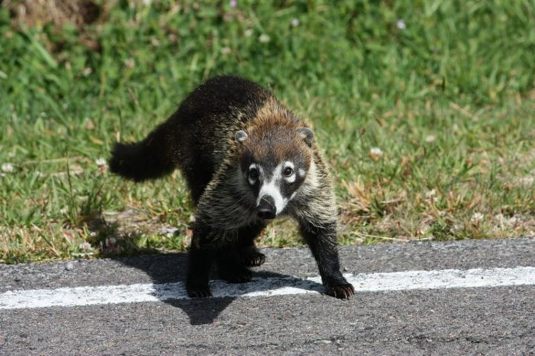 Wild Animal - San Jose