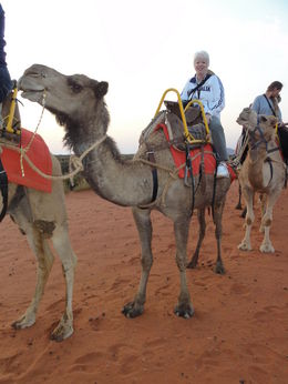 Me and Trevor the camel setting off to see the sunrise at Ayres Rock , Anne H - November 2012