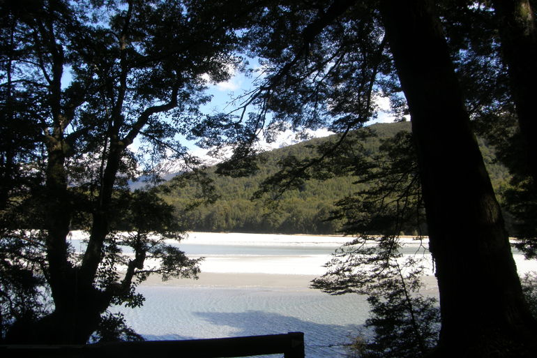 Dart River Jet Boat Ride and Wilderness Tour from Queenstown