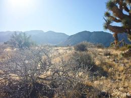 Enjoying the scenery , Lindsay P - November 2014