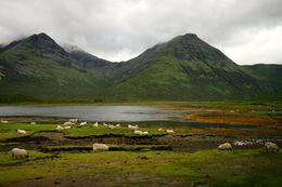 Sheep scattering around in wilderness with loch and mountains as backdrop, taken on the Isle of Skye. , Ines Kar Yee L - August 2015