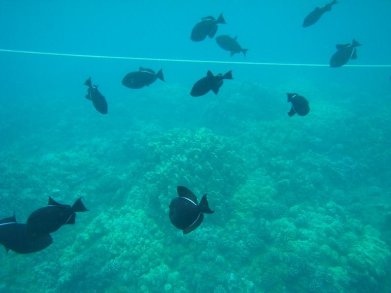 Underwater camera shots - Maui