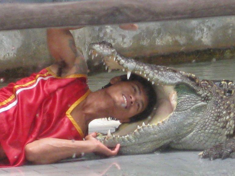 Croc show - Pattaya