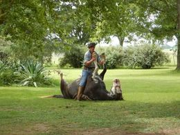 Gaucho Skills demostration at Estancia Ombu de Areco , Frank U - October 2015