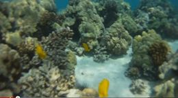 Underwater snorkeling at Kealakekua Bay, Cooks Monument. , Tropix - August 2012