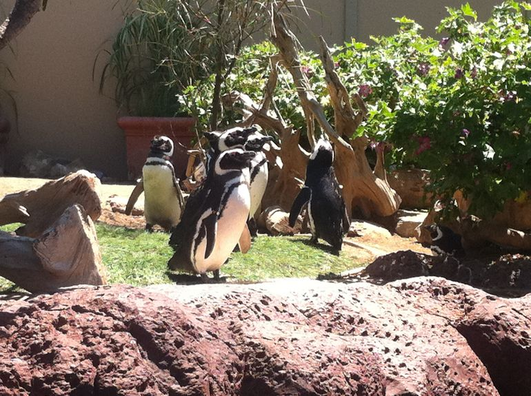 Penguins - San Diego