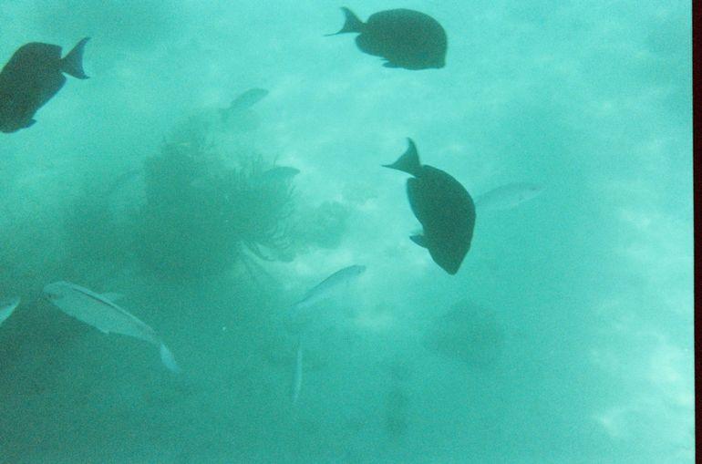 Snorkeling FUN - San Juan