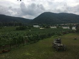 Beatiful vinyards , Chris V - August 2017