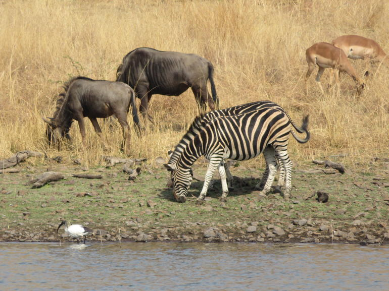 Pilanesberg National Park One Day Safari from Johannesburg photo 9