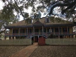 Laura Plantation , Twinkie - February 2018