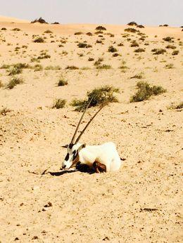 Desert safari , Emily W - March 2014