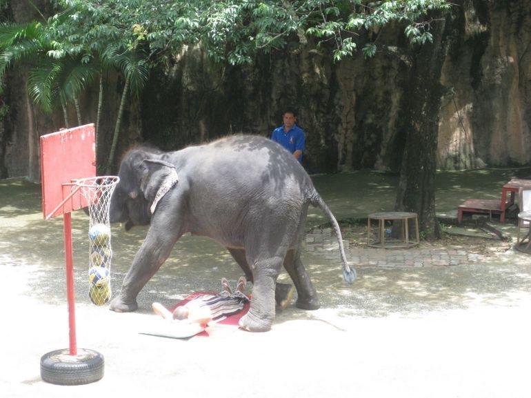Elephant show - Pattaya