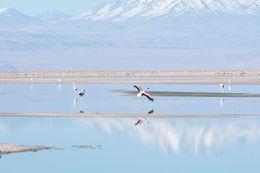 Atacama Salt Flat , lincoln_turner - May 2015
