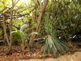 Walking through the jungle , Harold_Kennedy - September 2016