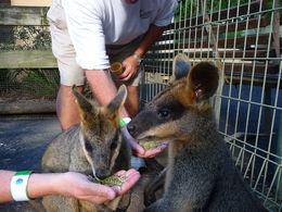 Two members a tour group from the US are thrilled with the friendly animals at the zoo! , Janelle E - April 2015