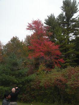 New Hampshire , Ruth E - October 2012