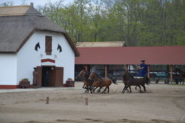 Ride'em cowboy! , Dorothy - April 2014