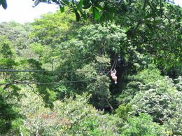 This is one of the ziplines over the beautiful canopies., Lance K - April 2008