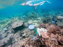 Our Go-Pro photos don't do justice to the incredible beauty of the reefs , wendyandkurtlutz - May 2017