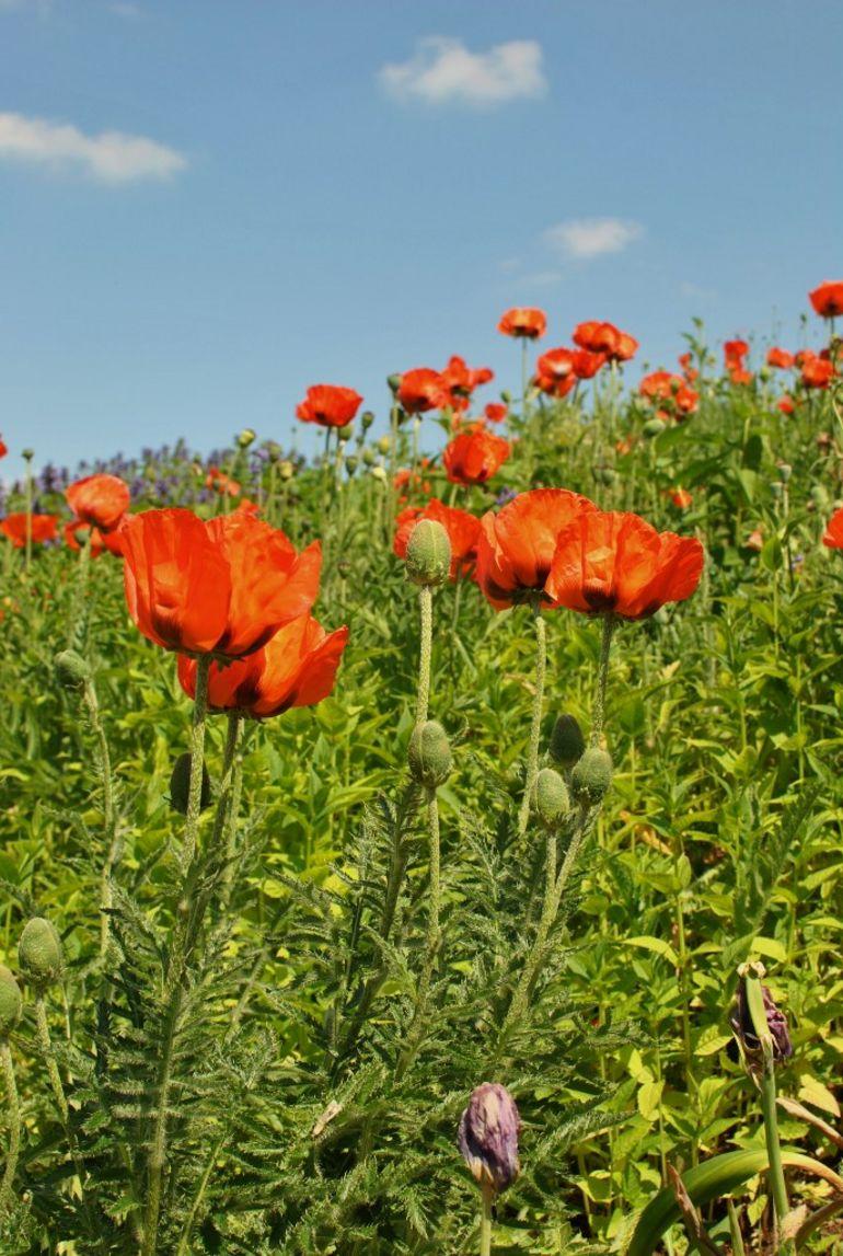 Beautiful Flowers -