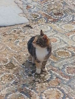 A lot of cats at Ephesus, especially on the mosaics. I think they work for the Ministry of Tourism. , Amy C - December 2012
