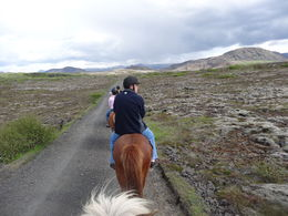 My husband took a photo while following his friend Stan. Beautiful scenery! Beautiful ponies! , Mandy - June 2013