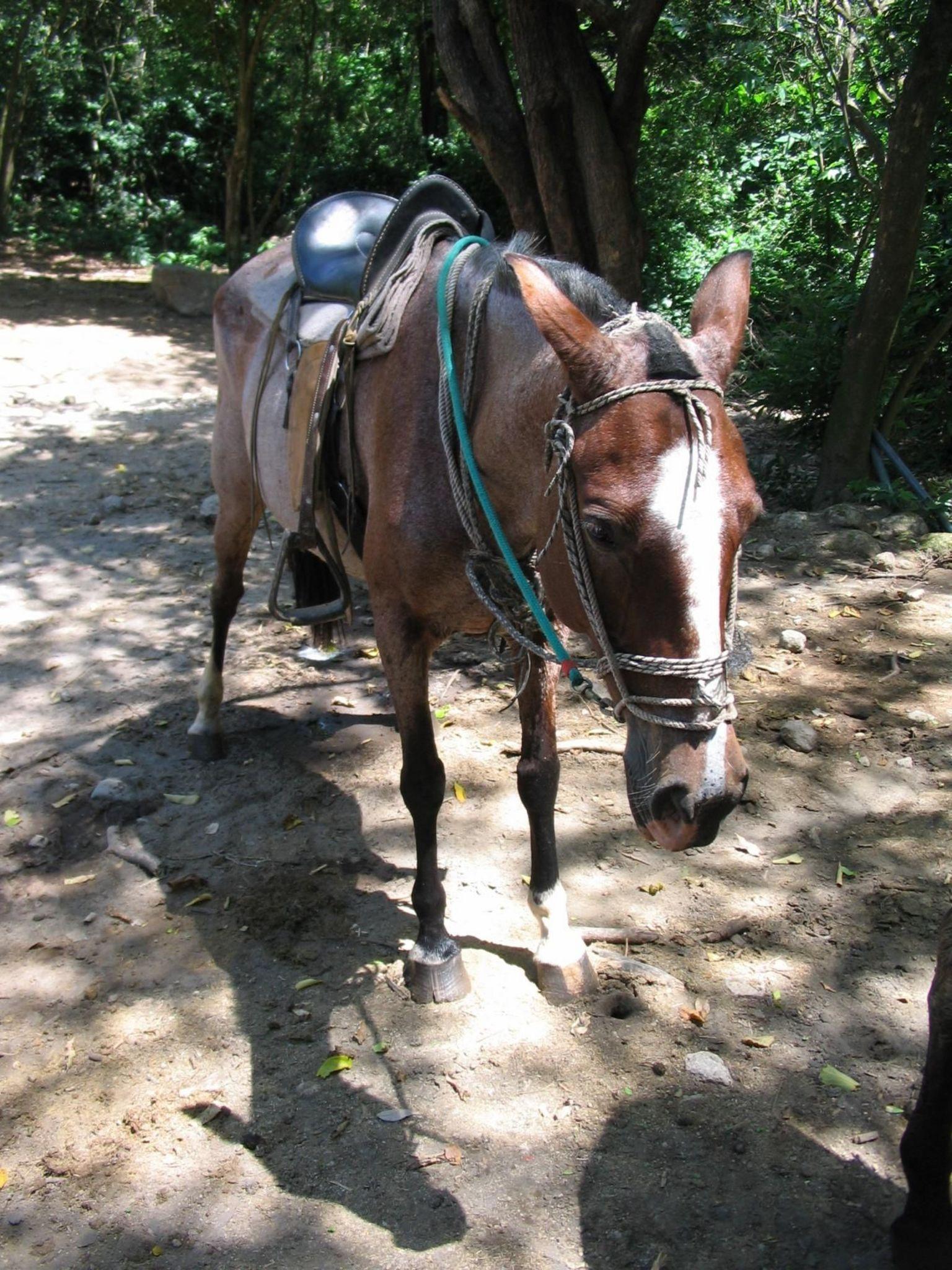 MÁS FOTOS, Buena Vista Transition Forest Combo Tour
