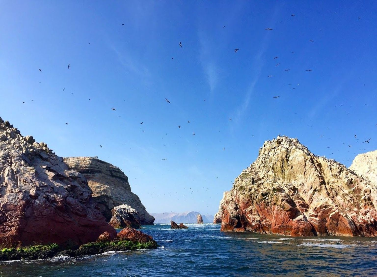 MAIS FOTOS, Viagem diurna pelas Ilhas Ballestas e pela Reserva Nacional de Paracas saindo de Paracas