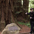 Excursión de medio día a Muir Woods y Sausalito (billete de ferry desde Sausalito opcional)., San Francisco, CA, ESTADOS UNIDOS