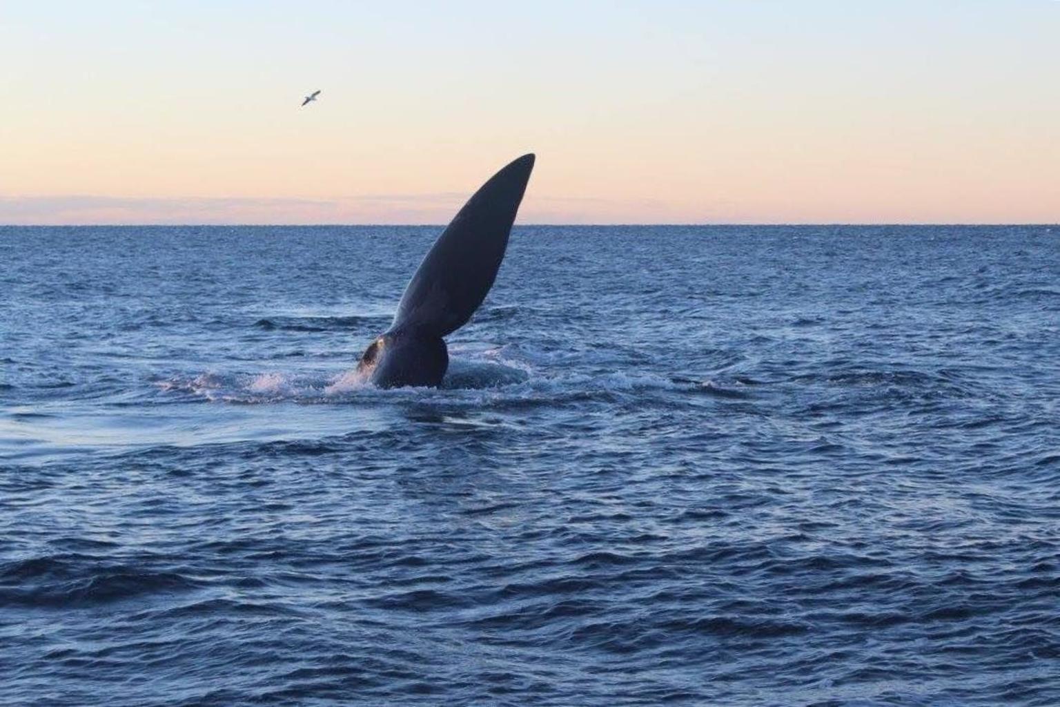 MÁS FOTOS, Tour de un día completo por la península Valdés desde Puerto Madryn con avistamiento de ballenas opcional