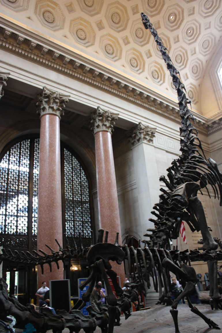American Museum of Natural History - New York City