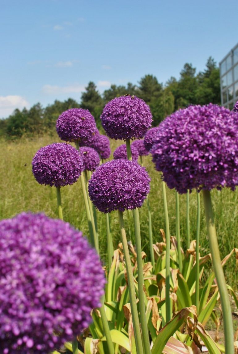 Beautiful Flowers_1 -