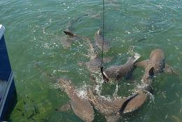 Hungry sharks - May 2014