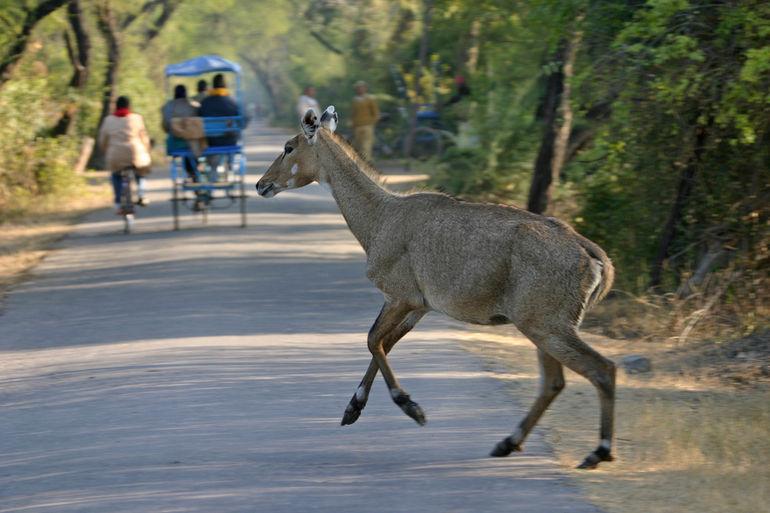 Koleado National Park - Jaipur