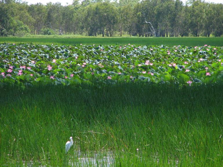 Mamukala wetlands - Darwin