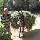 Excursión de 3 días: de Marrakech a Merzouga incluyendo el valle de Dadès y travesía en camello en Erg Chebbi, Marrakech, Ciudad de Marruecos, MARRUECOS