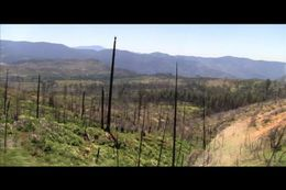 The product of a blazing forest fire., Chris W - August 2011