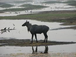 antelope - October 2012