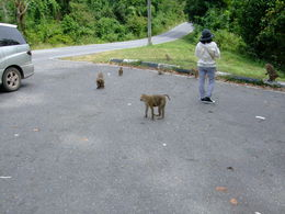 Some monkeys at a rest area. , Alexandru T - December 2012