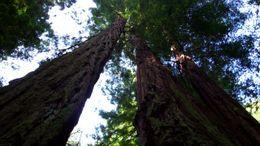 Muir Woods, B.Chen - August 2011